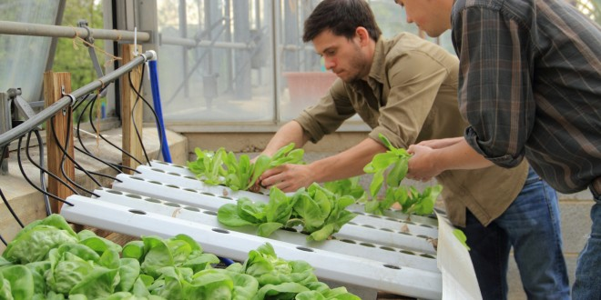 Clean and Green: Growing Vegetables Hydroponically