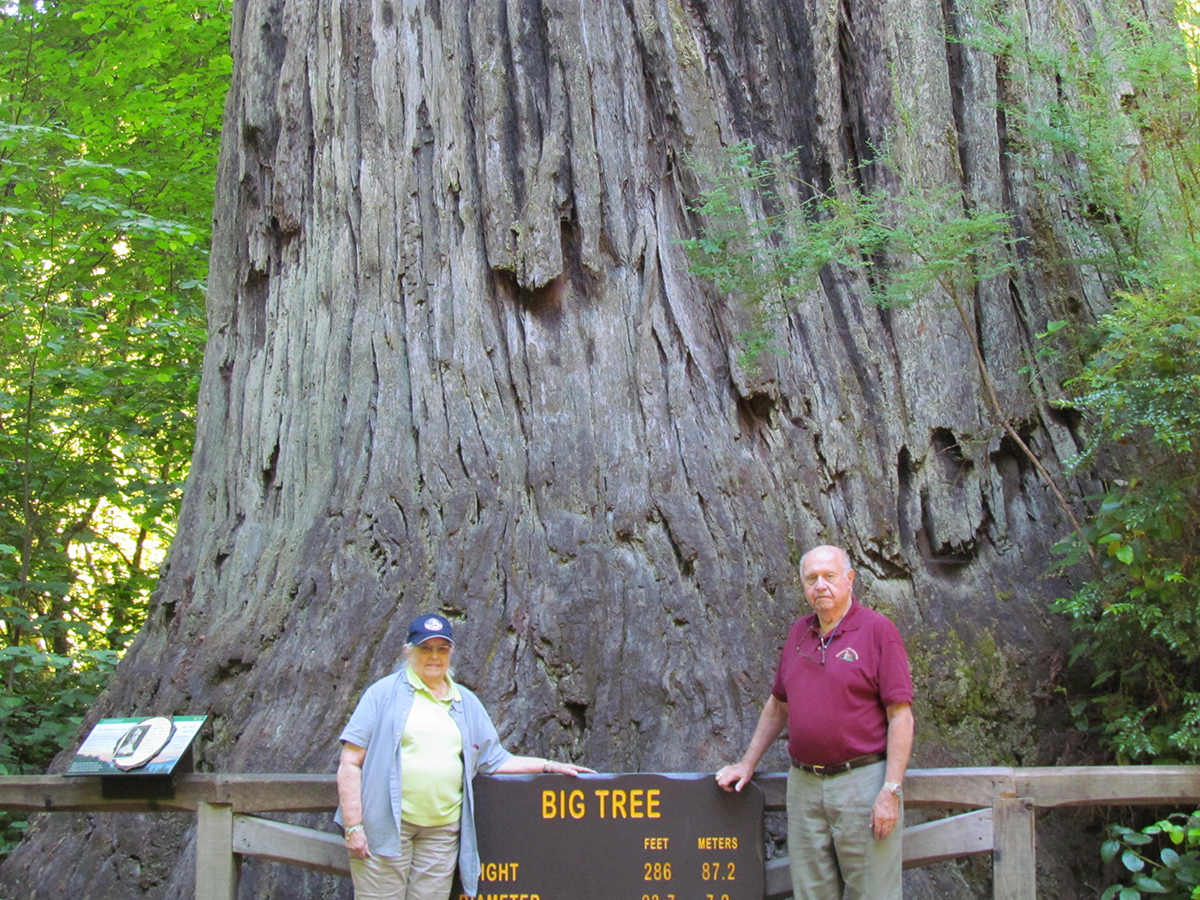 Big Tree at Redwood National & State Parks